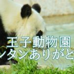 タンタン(パンダ)を支え続けた梅元良次(飼育員)と神戸王子動物園。中国へ帰るまでの日々。