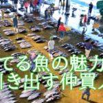 長谷川大樹は魚の仲買人。年齢や出身は?捨てられる魚の魅力を引き出すプロ。