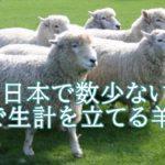 酒井慎吾は北海道の羊飼い。遊牧民に憧れ家族で羊牧場を経営。