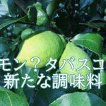レモスコとはレモンなのか?タバスコなのか?販売店や値段が気になる。