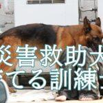 開田宏が育てる災害救助犬への心遣い。訓練所や活動を知りたい。