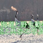 上田大作(写真家)北海道と野生動物を撮る理由。使用カメラや経歴は?