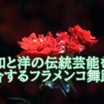 佐藤浩希はフラメンコ舞踏家。歌舞伎や宝塚の関係やスタジオも知りたい。
