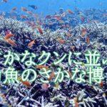 岸壁幼魚採集家の鈴木香里武とは?さかなクンとの関係や家族も凄い。