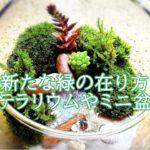 園芸家・大島恵の作るミニ盆栽や苔テラリウムが綺麗。店舗や著書は?