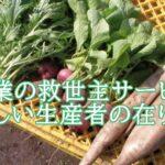 食べチョク秋元里奈は農業の救世主。学歴や実績は?講演の評判も知りたい。