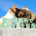 阪田泰志は革ジャン姿で猫を救う!保護シェルターや活動が知りたい。